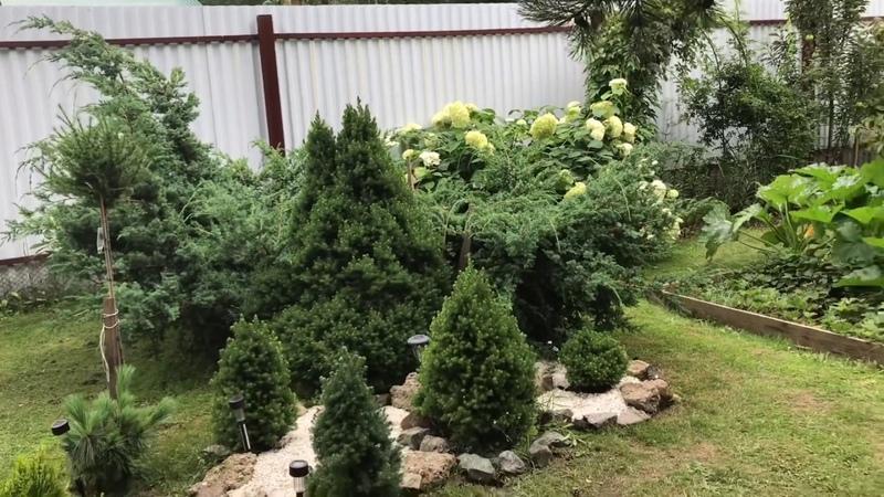 Мои хвойные растения. Как и чем удобряю. Какие укрываю на зиму. Все о моих любимчиках.❤️❤️❤️