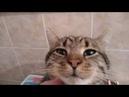 В Самые Добрые ручки Красивые котята.
