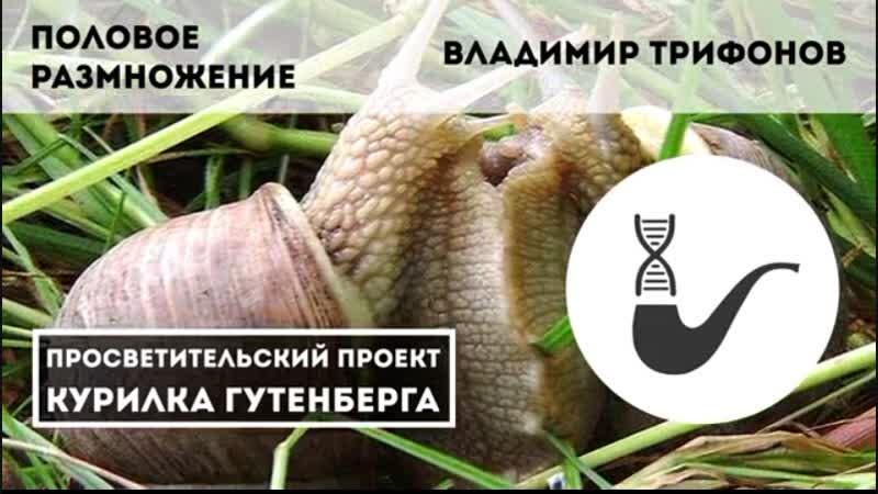 Половое размножение – Владимир Трифонов
