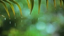 Relaxing Music Soft Rain: Relaxing Piano Music, Sleep Music, Peaceful Music ★148🍀