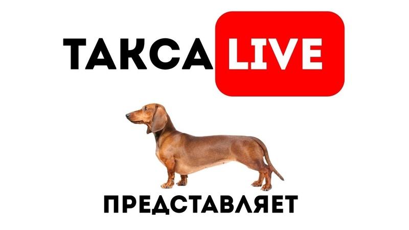 Такса Live 17 Камера мотор :)