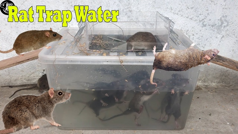 Rat Trap Water 🐀 7 Mice in trapped 🐭 Mouse/ Rat trap 👍 Easy make a Best Rat Trap Handmade