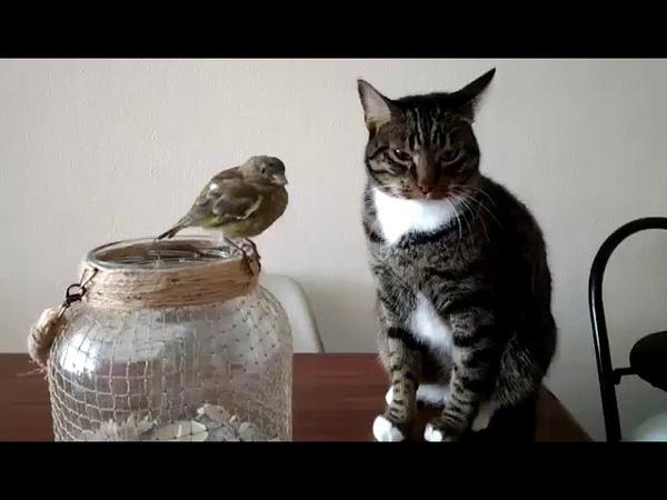 Śmieszne kot