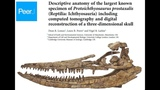 Medical scanner helps to unlock the mysteries of a giant ichthyosaur skull