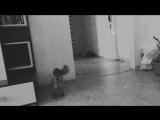 Cat Sir Charles Spencer Chaplin