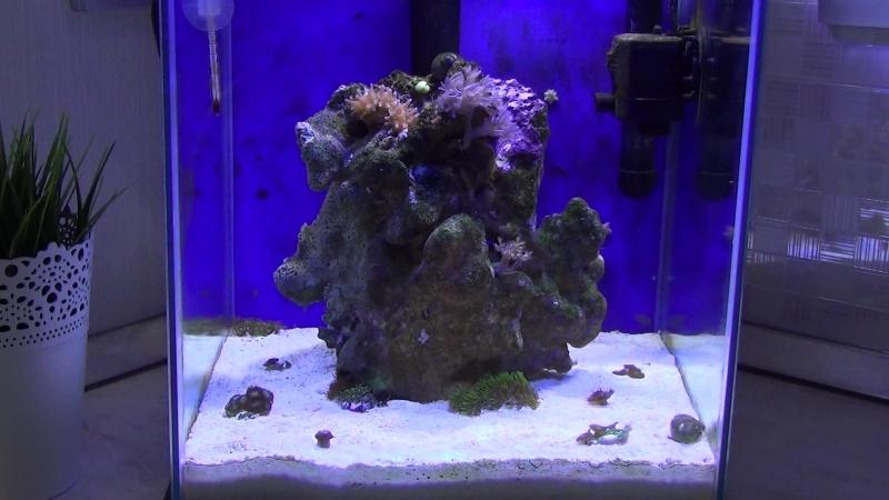 Бюджетный (Нано Риф) морской аквариум. Часть 1