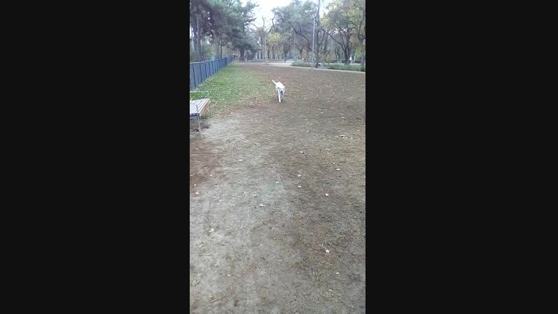 мисти_парк