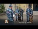 Служебные собаки помогают патрулировать улицы города