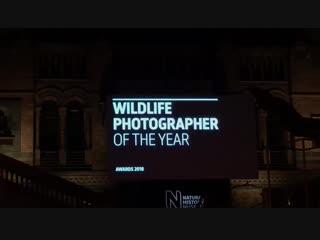 Wildlife Photografer of the year 2018. Прямой эфир