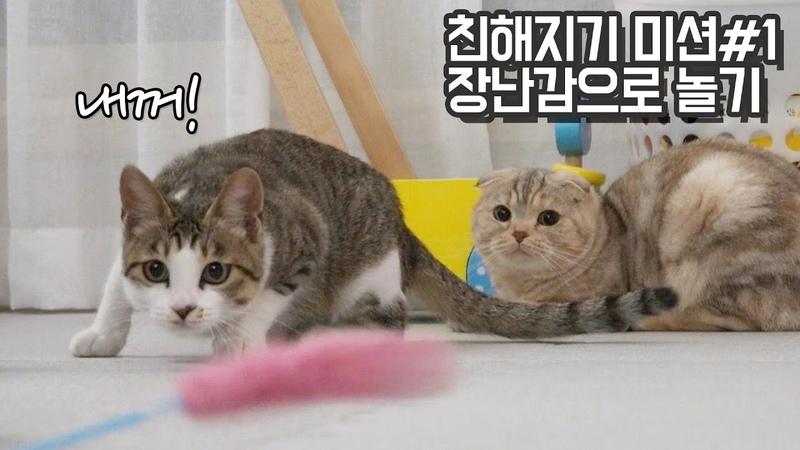 칠냥이와 고양이들 장난감 쟁탈전! 친해지기미션01