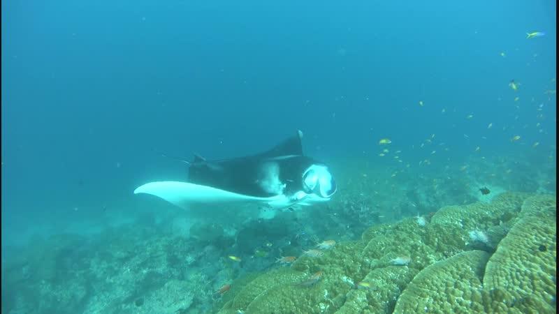 Приключения. Подводные Мальдивы