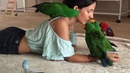 Aeriana and her eclectus family Fourth of July special