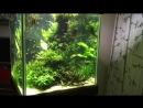 Обзор кубического аквариума 450 л