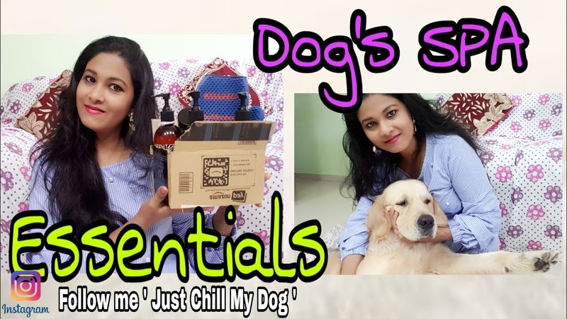Dogs Spa Essentials At Home Amazon Dogs Grooming Shopping Haul Golden Retriever