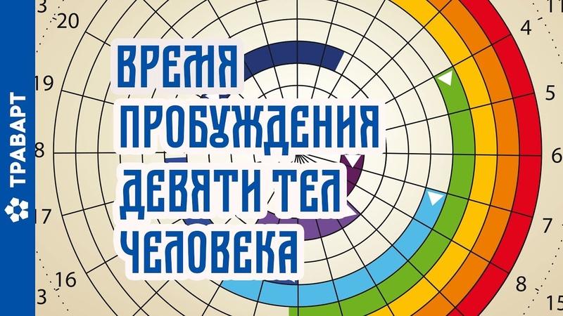 Аура человека и время активности тонких оболочек По книге Шемшука Волхвы travart.ru