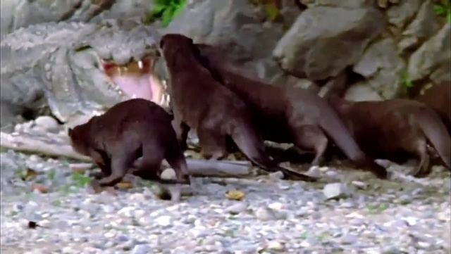 Гопники в мире животных