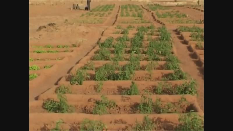 Caproset centre producteur de semences tropicales en agro-écologie Mali Afrique