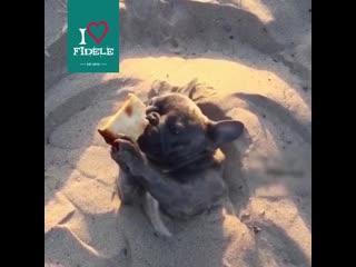 Лето с fidele.mp4