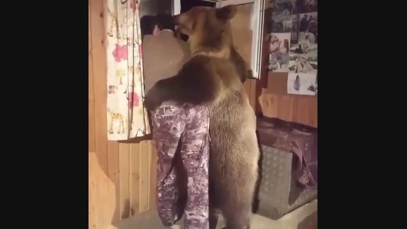Когда повздорили с мужиком но медведь мягче характером и первый идет мириться
