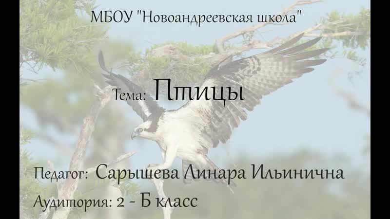 Скопа птица 2018 года