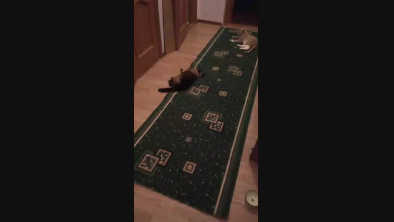 Кошкин дом, кошкин ковёр, кошкины правила