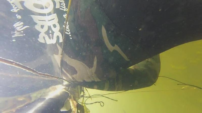 Подводная охота г.Жуковка ловля окуня руками2 щучки11.09.18