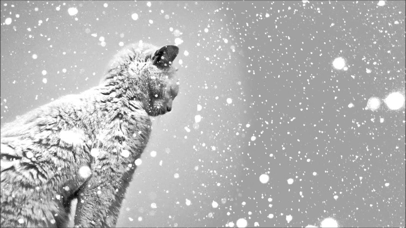 Niklas Thal - Winter Symphony