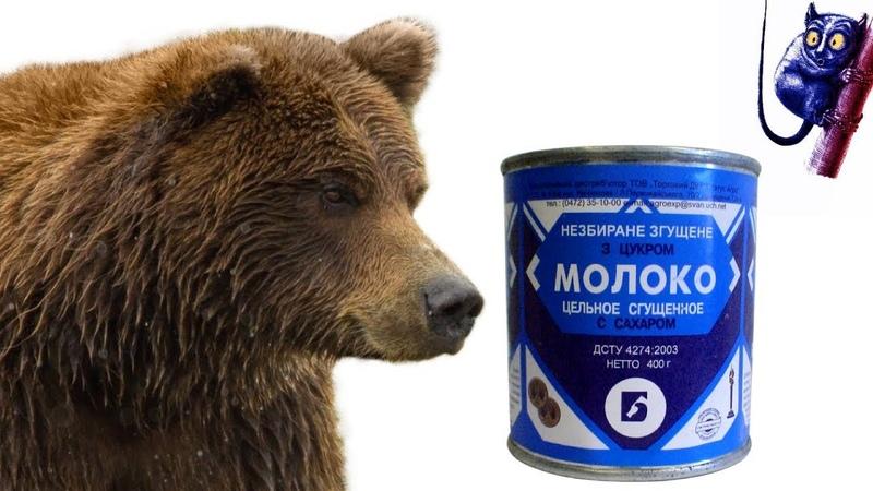 Bear eats Condensed Milk