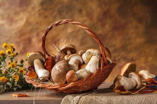 Условия роста грибов. При какой температуре растут грибы осенью