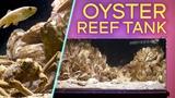 RARE OYSTER REEF AQUARIUM Brackish Water Aquascape (IN 4K)