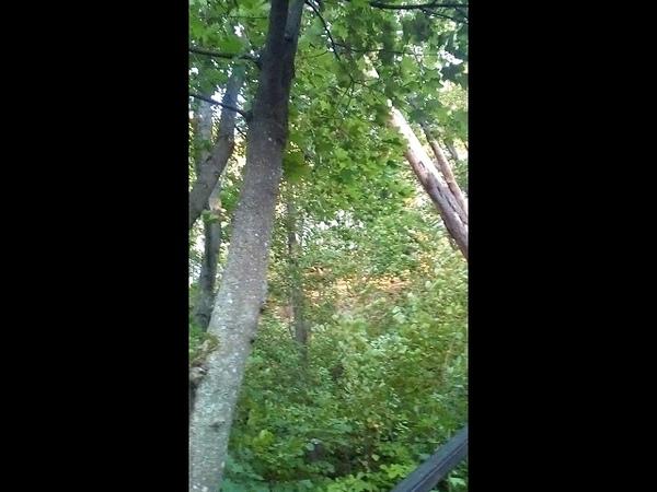 Стоны сломанного дерева