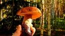 В лес за опятами Встреча с лесным жителем