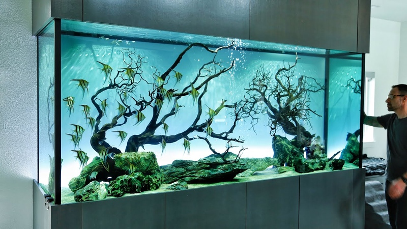 The Ultimate Angelfish Aquascape