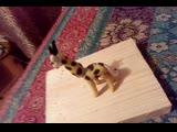 жирафик рафик