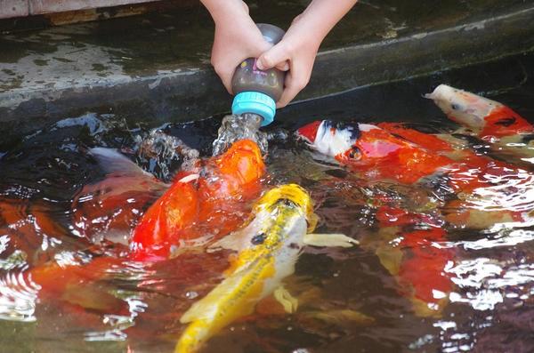 кормушка для рыб