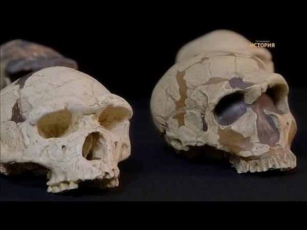 Кто убил неандертальца?
