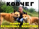 Собака - лучший друг человека! Приют для бездомных животных Ковчег , г. Ялта
