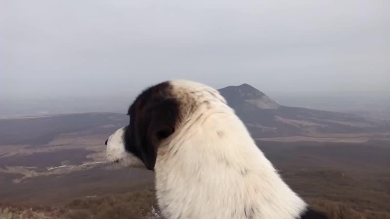Собакин на вершине горы Развалка