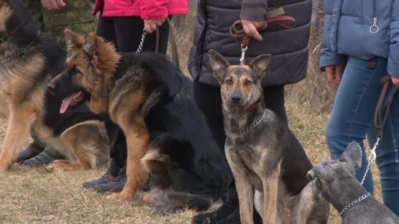 Курсы по дрессировке домашних собак проводит профессиональный кинолог Наталья Шпилевская