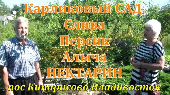 Карликовый сад.Слива,Персик,Алыча,Нектрарин. Кипарисово Владивосток