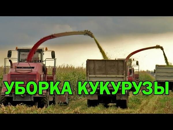 [Уборка кукурузы] 2х КВК-800, 3х МАЗ 5551, 2х БЕЛАРУС 1221ПИМ-40