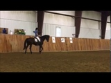 Vera Munderloh clinic, canter transitions 42017