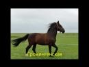Все породы лошадей