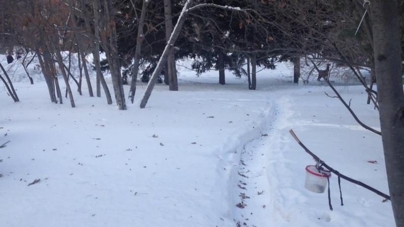 Птицы зимой Пение птиц в парке Монумент Славы Новосибирск Singing birds winter in the park