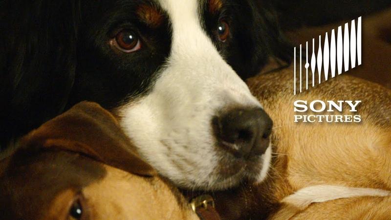 Путь домой | Фичуретка: Shelter Pets Day PSA