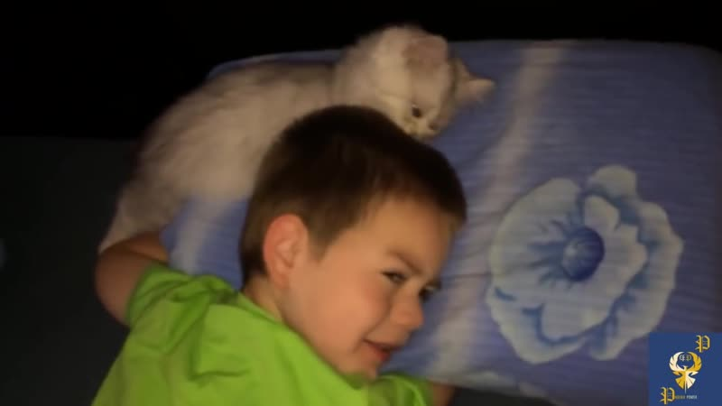 Cats Alarm Clocks - Cats Waking Up Their Owners Part 3