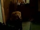 Моя собака бакс жжет...