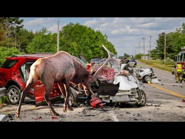 động vật là hung thần của ô tô : 2 mặt khi con người sống gần động vật