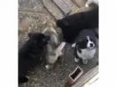 Собака и 5 щенков ищут любящую семью ❤