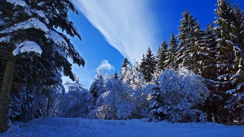 Картинка зима. Зима, снег, ель, деревья, природа.